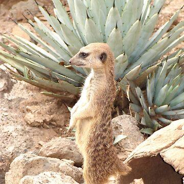 Meerkat on Watch by dizzyg