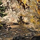 Fall in the Big Thompson Canyon by Barb Miller