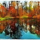 Autumn reflection by signore