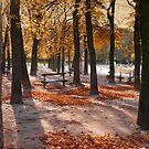 Autumn in Paris by laurentlesax