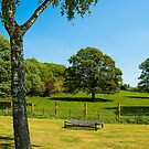 Woodleigh School grounds in July by Thomas Tolkien