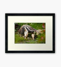 Giant anteater Framed Print
