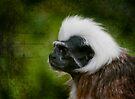 Colubus Monkey  by Foxfire