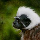 Colubus Monkey  by ©FoxfireGallery / FloorOne Photography