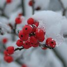 Red Berries in the Snow by Mark Theriault