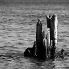 Old Posts.  by Mark Theriault
