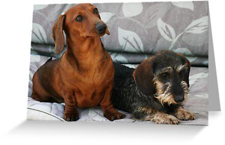 Mini smooth and mini wire dachshund friends by Joanne Emery