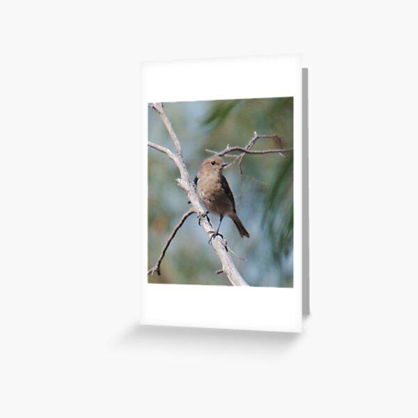 ROBIN ~ Dusky Robin by David Irwin 060819 Greeting Card