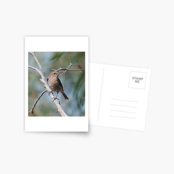 ROBIN ~ Dusky Robin zvjceHFG by David Irwin 060819 Postcard