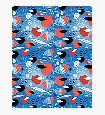 fish pattern Photographic Print