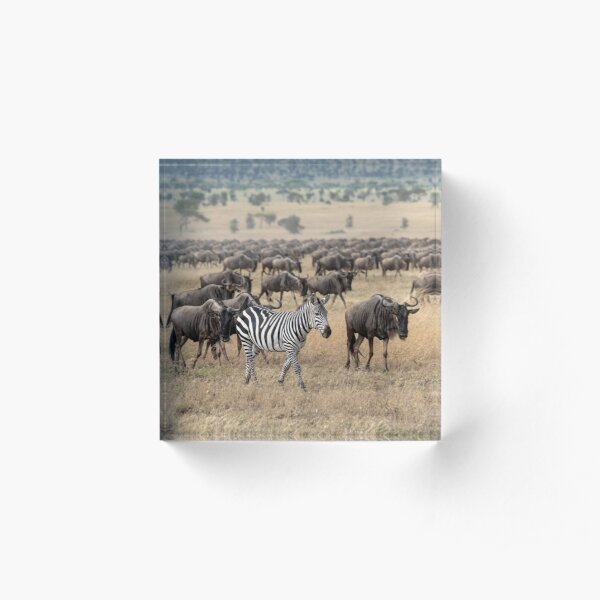 Hitching A Ride With The Great Migration Acrylic Block
