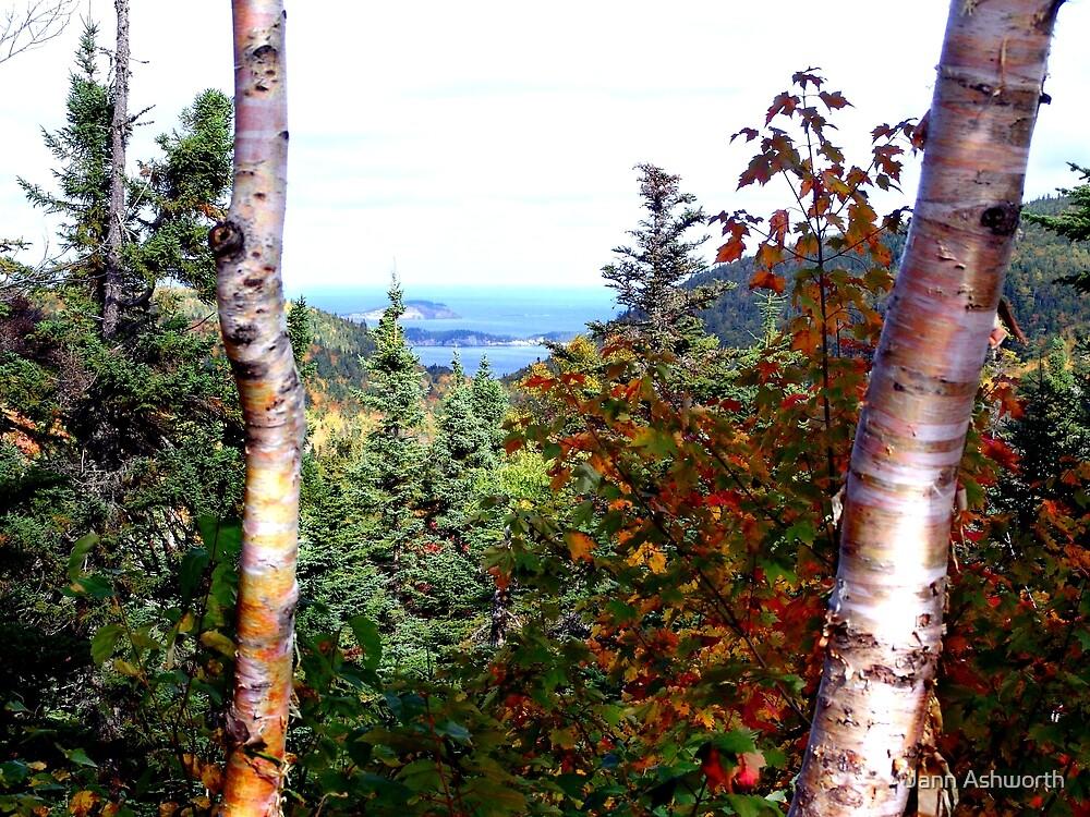 Cape Breton Autumn by Jann Ashworth