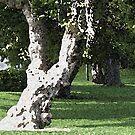 Beloved old Tree by IrisGelbart