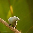 Am Bird! by vasu