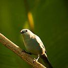 Birdie! by vasu