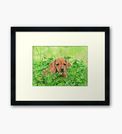 Jersey in the Clover Framed Print