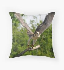 Prairie Falcon ~ Captive Throw Pillow