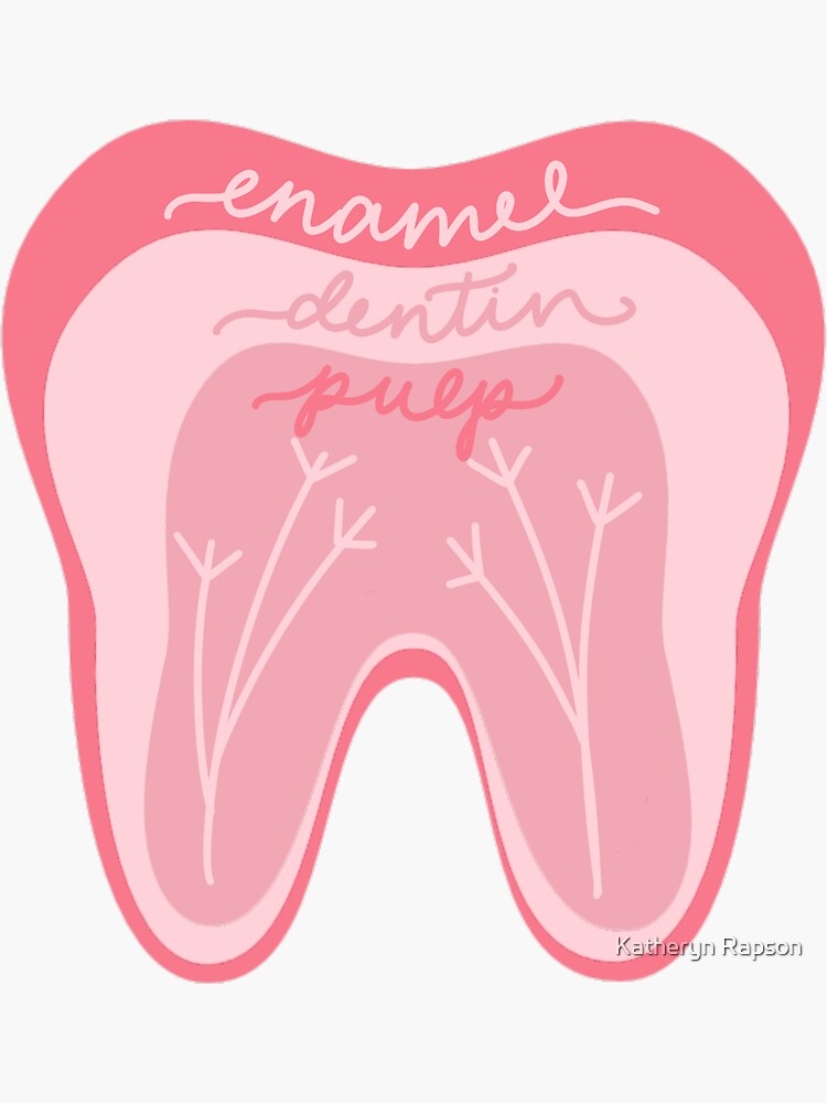 Tooth Anatomy Pink by annemarie9