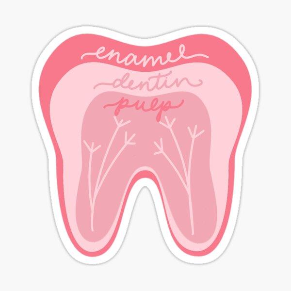 Tooth Anatomy Pink Sticker