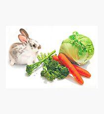 Bunny Banquet Photographic Print