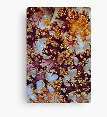 Soft coral abstract Canvas Print
