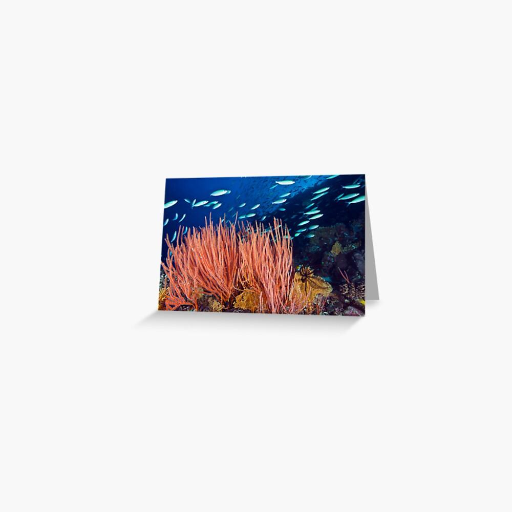 Wheeler Reef garden Greeting Card