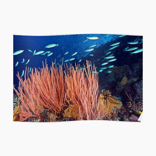 Wheeler Reef garden Poster