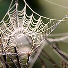 Pearls by LadyFi