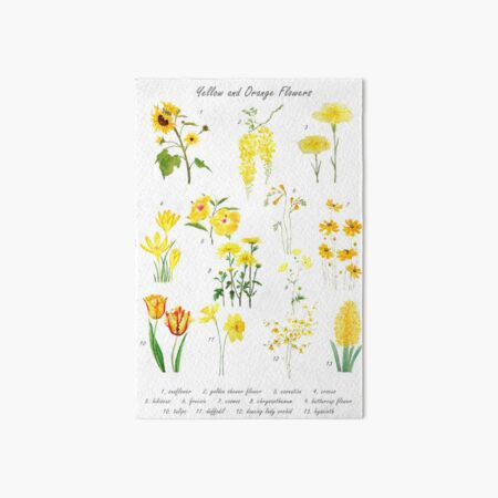 yellow and orange flowers collection  Art Board Print