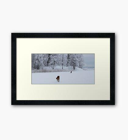 Freedom Framed Print