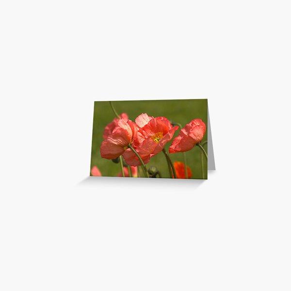 Ruffled Greeting Card