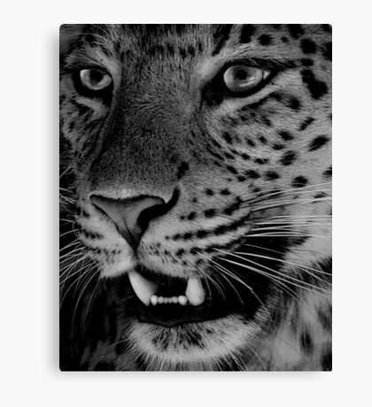 Big Cat II Canvas Print