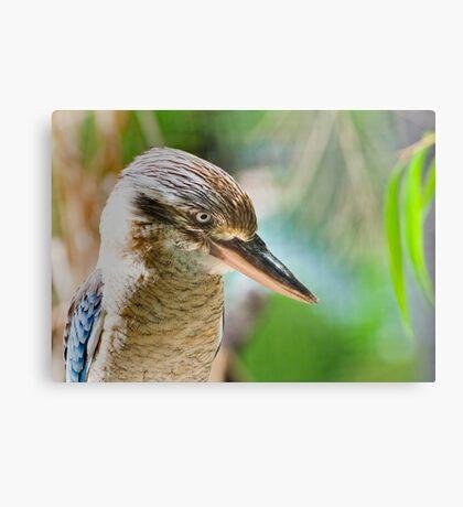 Blue winged kookaburra  Canvas Print