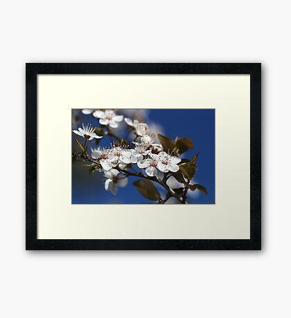 She Blooms in White Framed Print
