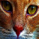 Cats Eyes by Trevor Kersley