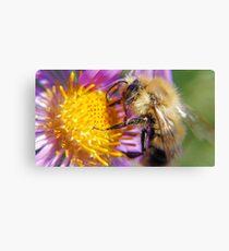 Bumble Bee 1 - Macro Canvas Print