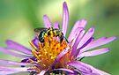 Flying Ant - Macro by Debbie Pinard