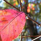 Red Leaf by BShirey