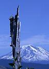 Mount Adams by Dave Davis
