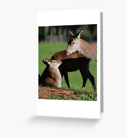 Doe & Young  Greeting Card