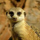 Adopt A Meerkat !!! by artisandelimage