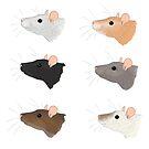 Rat Varieties by KelseyBass