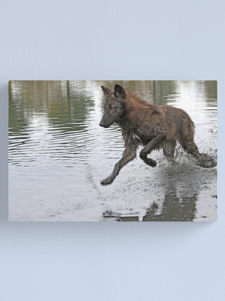 Alternate view of Making a splash, wolf style Canvas Print
