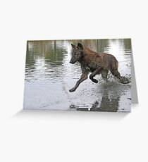 Making a splash, wolf style Greeting Card
