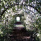 an apple arch to beyond by nutchip