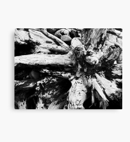 Starburst Stump Canvas Print
