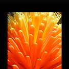 hot poker on black by KazM