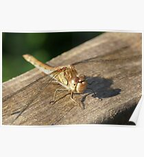 Dragon Fly on Somerset Levels Poster
