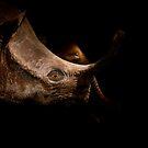 Hippo versus elephant by photo-kia
