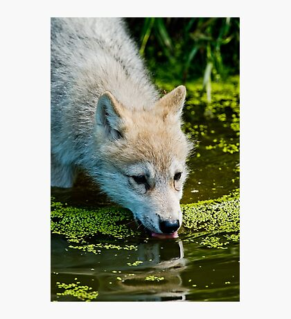 Mighty Big Thirst For A Little Fella Photographic Print